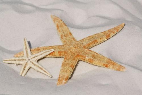 starfish-343791_1920